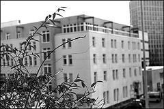 Leica Ic 1950 | Elmar 3,5/50 | Kodak T-MAX 400 | ISO 400/27°